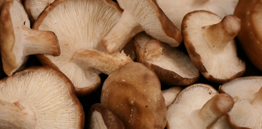 Mushrooms as Medicine An Interview with Paul Stamets